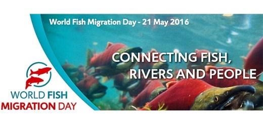 world-fish-migration-day-paysbasque-2