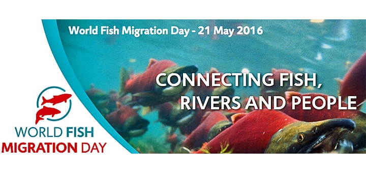 world-fish-migration-day-paysbasque-2