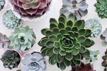 5 belles plantes dépolluantes à adopter d'urgence