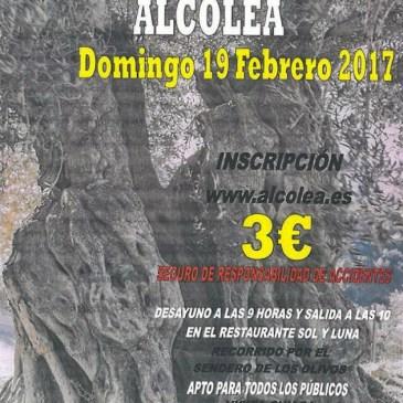 Alcolea – VI Ruta Olivos Centenarios 2017