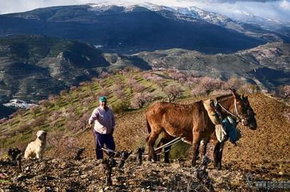 Agricultura y tradiciones de La Alpujarra