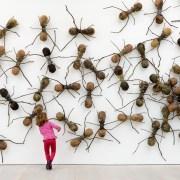 L'invasion des fourmis géantes