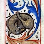 Des chats médiévaux qui se lèchent les fesses