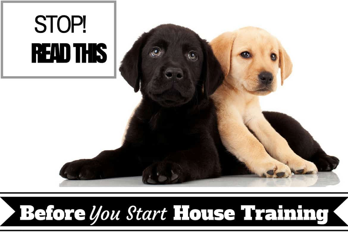Basic Guide On House Training Puppies Indoor And Outdoor