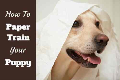 Medium Of Putting A Dog To Sleep With Benadryl