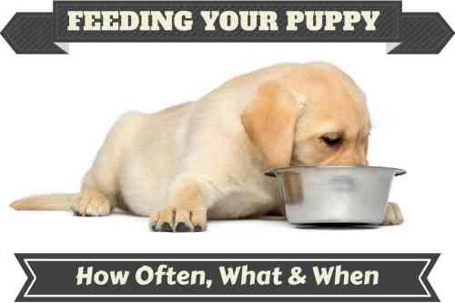 Medium Of Dog Not Drinking Water