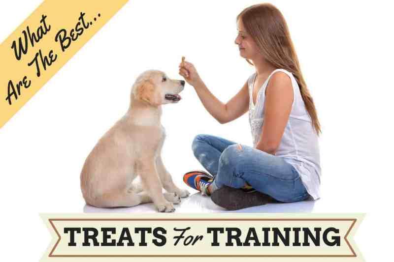 Large Of Homemade Grain Free Dog Treats