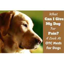 Small Crop Of Can You Give Dogs Benadryl