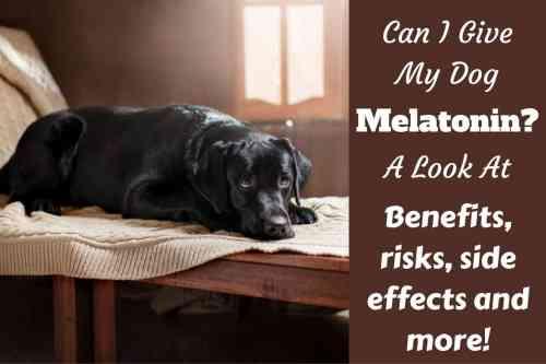 Medium Of Can Dogs Take Benadryl