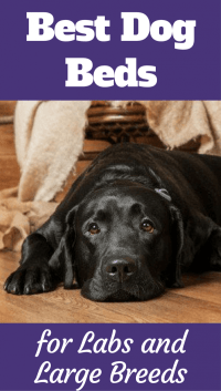 The Best Dog Beds For Labs And Large Dogs in 2018 Reviewed