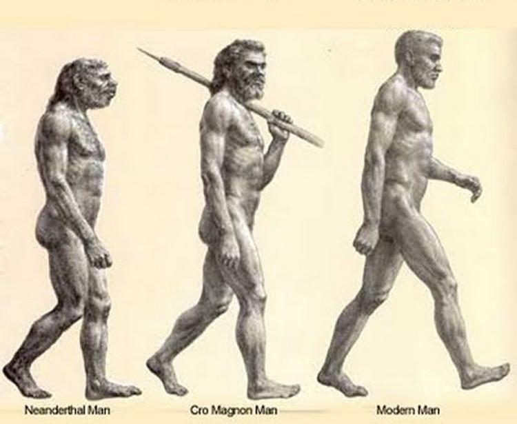 191 se aliaron sapiens y lobos contra los neandertales