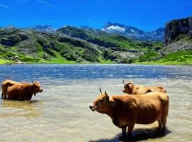 Lago Ercina / Shutterstock