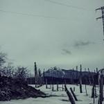 IMG_6320---La-Slitta---Scene
