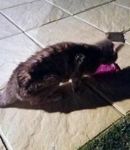 Australia: Pippa, la gatta che sopravvive 49 giorni dentro un container VIDEO, FOTO04