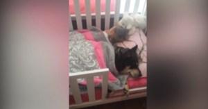Trova il cane che dorme... nella culla con la figlia: VIDEO adorabile diventa virale