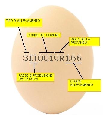 Come capire se un uovo è fresco e tante altre cose da sapere