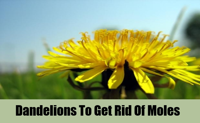 How To Get Rid Of Moles With Home Remedies Lady Care Health