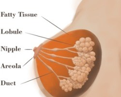 Symptoms And Treatment Of Invasive Breast Cancer Types