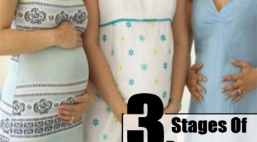 Three Stages Of Pregnancy