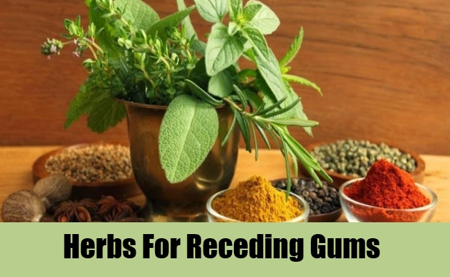 Herbs For Receding Gums