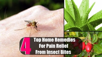 4 Top Home Remedies For Pain Relief From Insect Bites