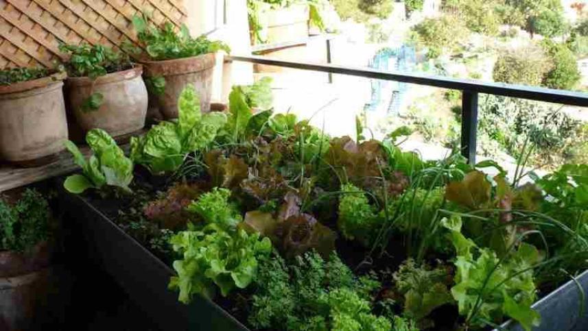 Plantar en huertos urbanos con poca luz la huertina de toni - Huerto urbano balcon ...