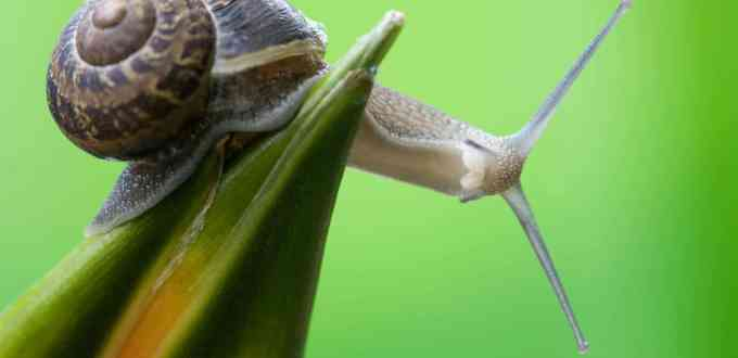 Snail on the tropical flower