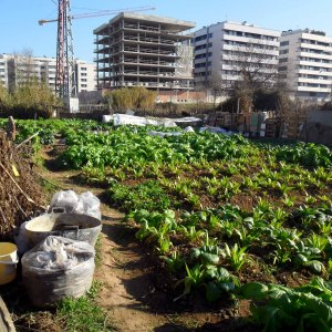 Como preparar la mesa de cultivo para el huerto urbano for Asociacion cultivos huerto urbano