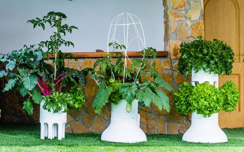 entutorado-new-garden-system