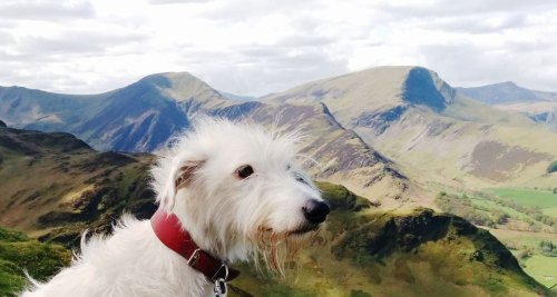 Marvellous Dog Friendly Hotels Virginia Beach Colorado Springs Hotels That Allow Dogs Lake District Dog Friendly Hotels Lake District Dog Friendly Accommodation Hotels That Allow Dogs