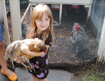 Cleveland Heights Poised to Allow Backyard Chickens, Lakewood May Follow