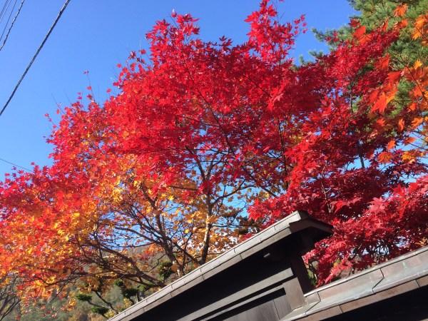 写真 2015-10-28 10 43 04