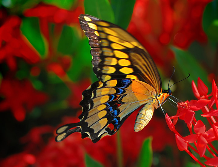 Hd Wallpapers 3d Red Black Background Bill Mangold Photographe La Mauvaise Herbe