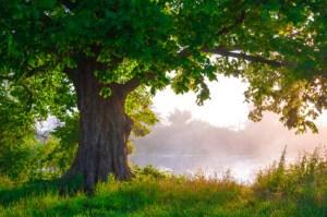 La méditation permet de lutter contre l'oxydation et d'améliorer votre espérance de vie