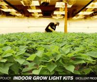 3 Ways to Indoor grow lights | James lamp socket