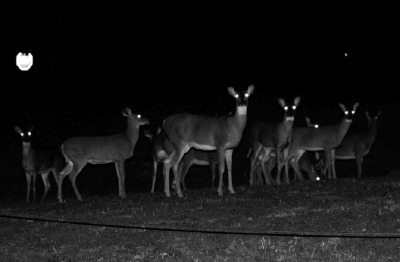 Deer In A Trucks Headlights