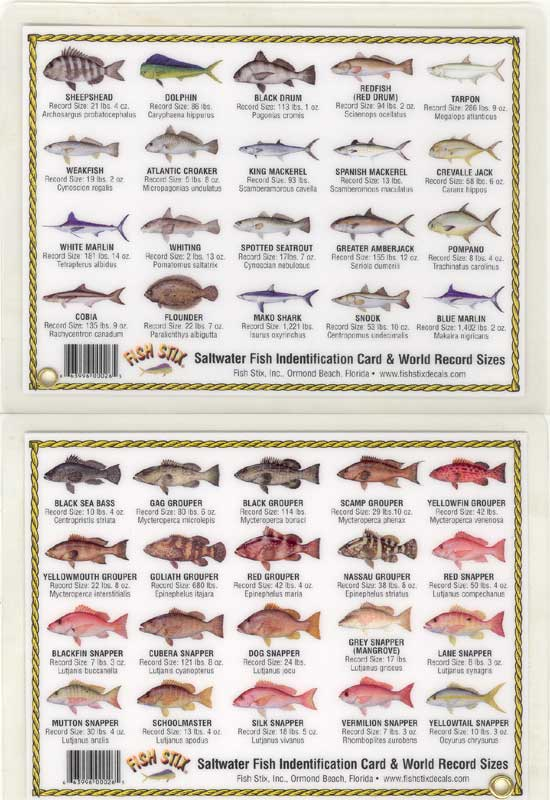 Saltwater fish list list of fish in florida 2017 fish for Florida saltwater fishing license