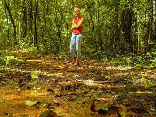 Hiking in French Guiana - Where is the snake going?