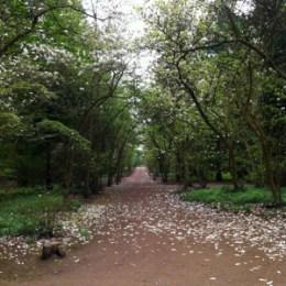 Auszeit im Forstbotanischen Garten in Köln