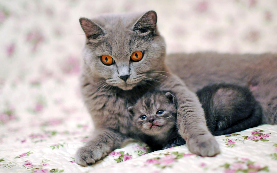 Cute Chat Wallpaper For Whatsapp Mom Cats And Their Beautiful Kittens 10 Adorable Photos