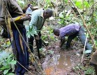 cameroun source