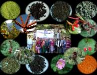 edible wild fruits Deepak Dhyani