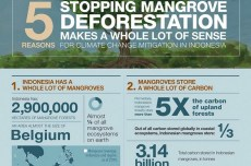 Mangroves vs. climate change: even more effective than upland forests