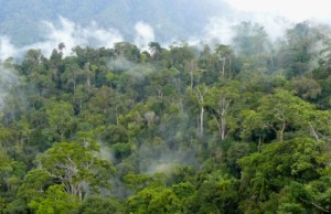 Landscape of natural production forest in concession area of PT. Sumalindo Lestari Jaya 2, in Long Bagun, West Kutai district, East Kalimantan, Indonesia.