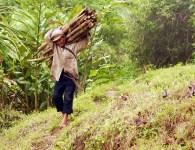 Collecting Rattan in Gunung Simpang, West Java, Indonesia. Photo: Yayan Indriatmoko/CIFOR