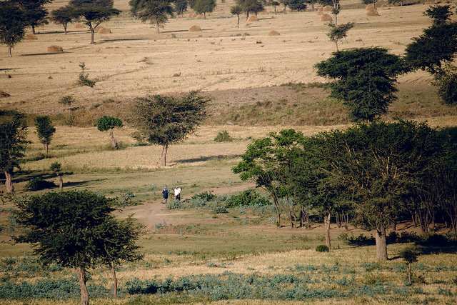 Mixed landscape around Lake Lagano area, Ethiopia. Ollivier Girard / CIFOR.