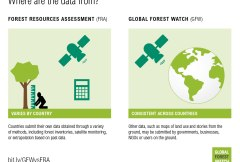 The Where and When and How of forest cover change in 5 infographics