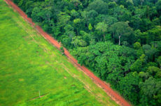 New Forest 500 analysis shows that 2020 deforestation goals are unlikely to be achieved