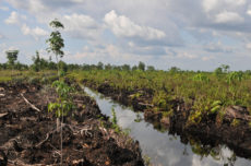 Peatlands: 'black gold' for climate mitigation