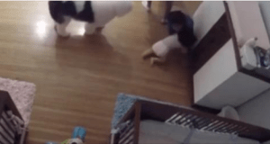 Niño de nueve años se lanza para impedir que su hermano bebé caiga al piso (VIDEO)